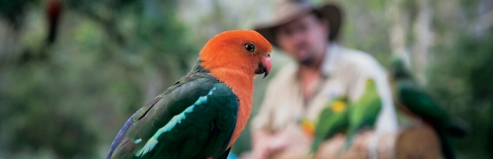 The Native Birds of the Daintree Rainforest