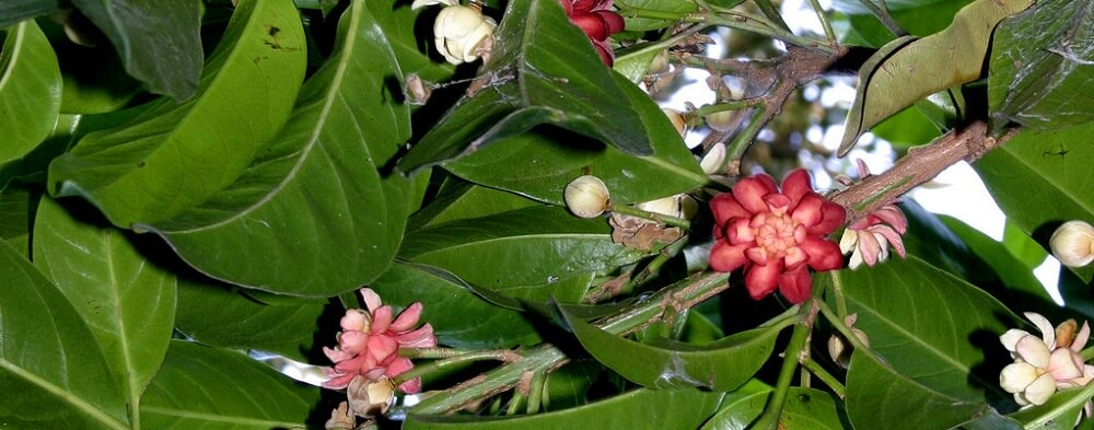 The Plants of The Daintree Rainforest
