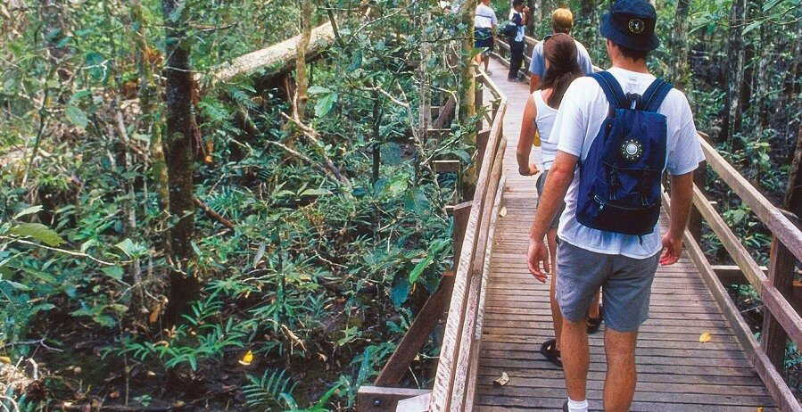 Cape Tribulation and Daintree Tour Rainforest Walk I