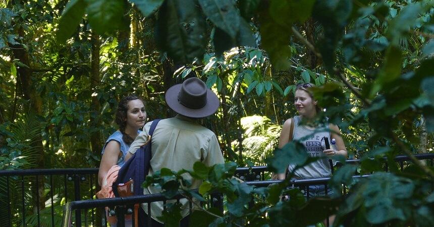 Daintree Rainforest Tours - Guided Rainforest Walk