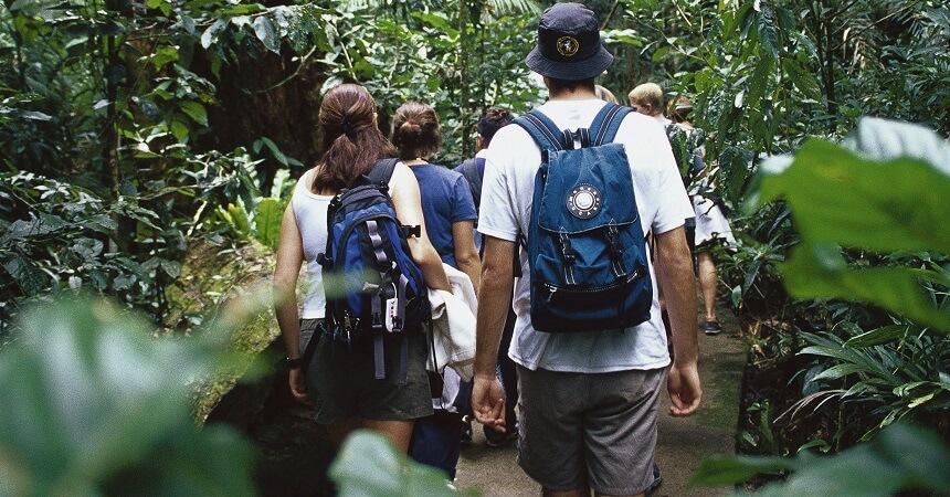 Daintree Rainforest Tours - Mardja Boardwalk