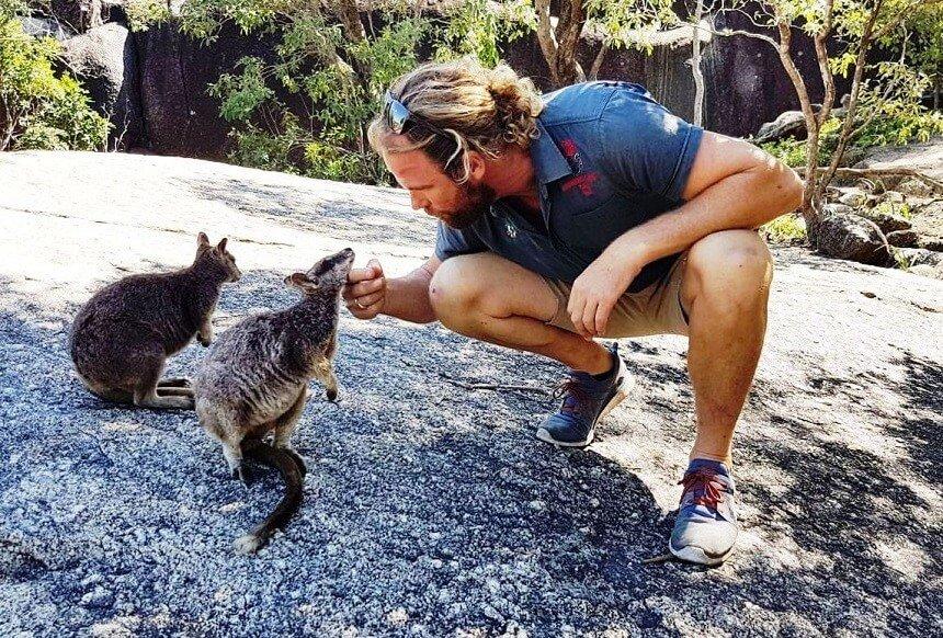 Feed Wild Rock Wallabies