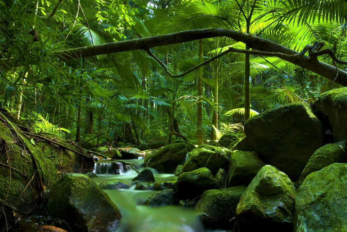 How was the Daintree Rainforest created?