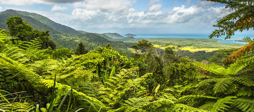 Is the Daintree rainforest dangerous?