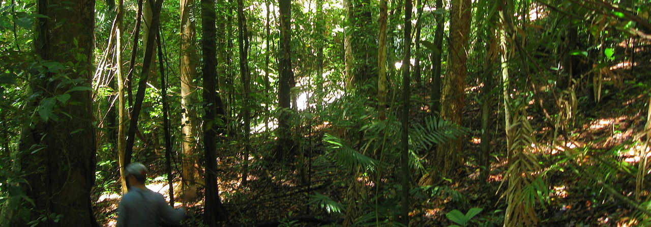 Is the Daintree Rainforest the Oldest in the World?