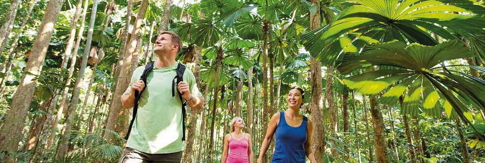 Cape Tribulation & Daintree Tour Overnight $194