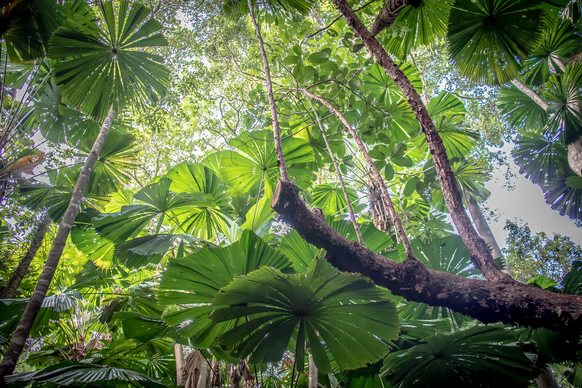 What's the difference between our Daintree Rainforest tours?
