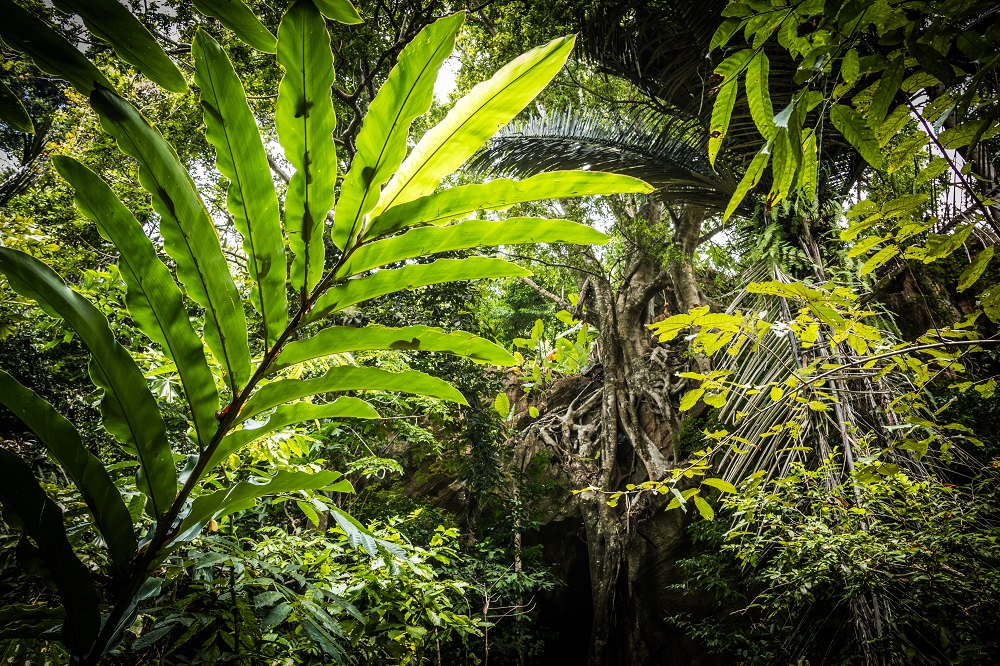 What type of rainforest is the Daintree?