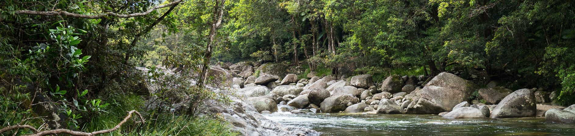 What state is the Daintree rainforest in?