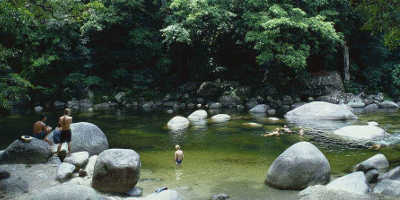 1 Day Cape Tribulation & Daintree Rainforest Tour with Port Douglas $169