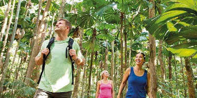 Cape Tribulation & Daintree Tour Overnight $204