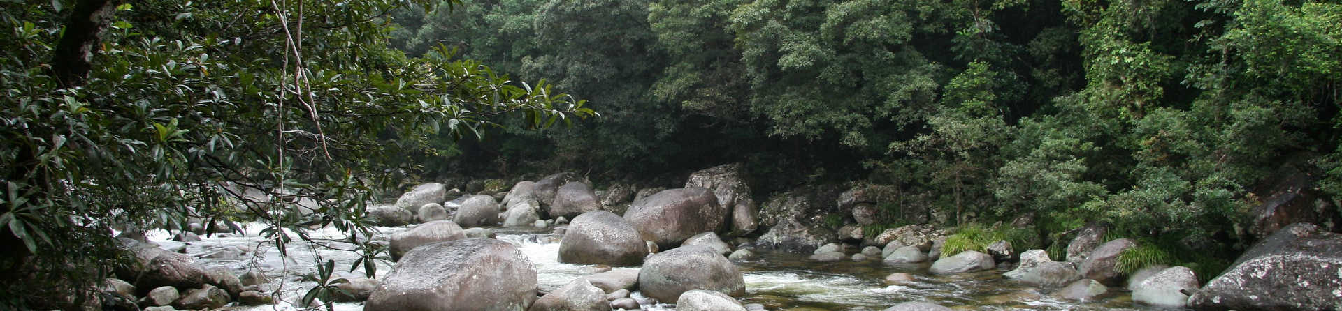 What is special about the Daintree Rainforest?