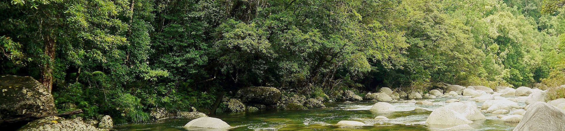 How do you get to the Daintree rainforest?