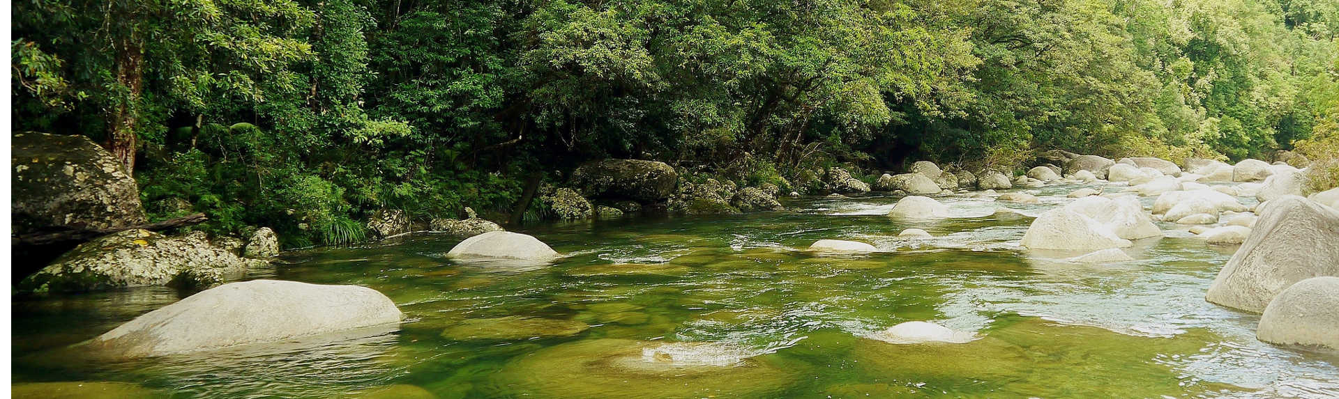 Can you go to Daintree Rainforest on your own?