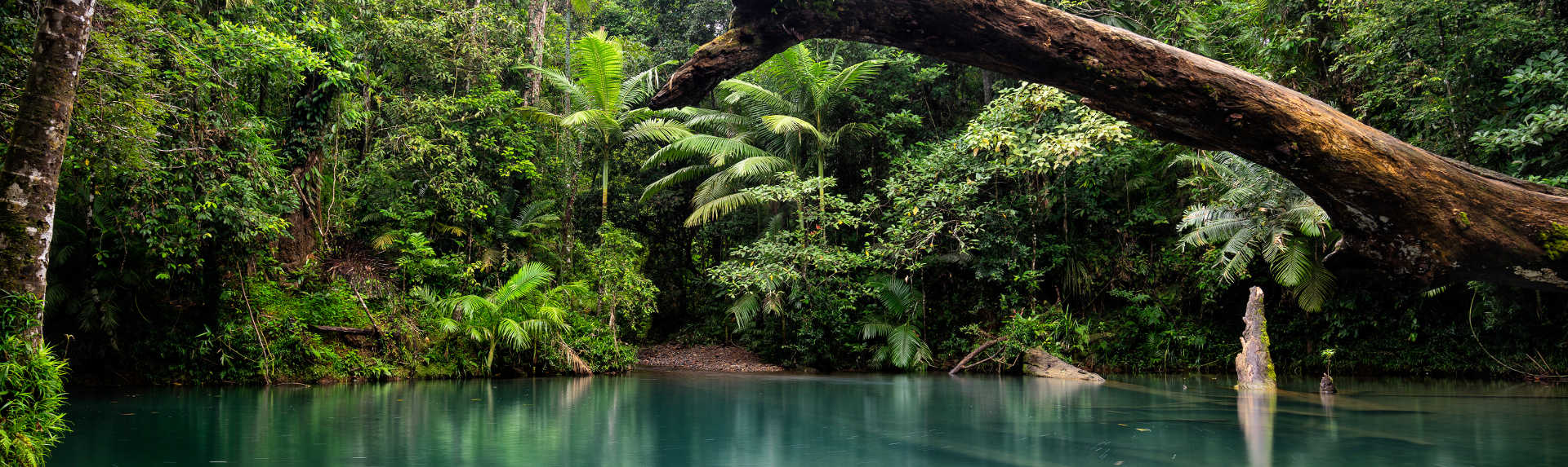 What is the best time to visit the Daintree rainforest?