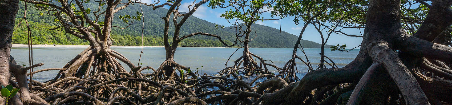 Who owns the Daintree Rainforest?